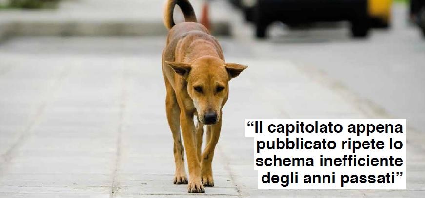 lp_18 cani